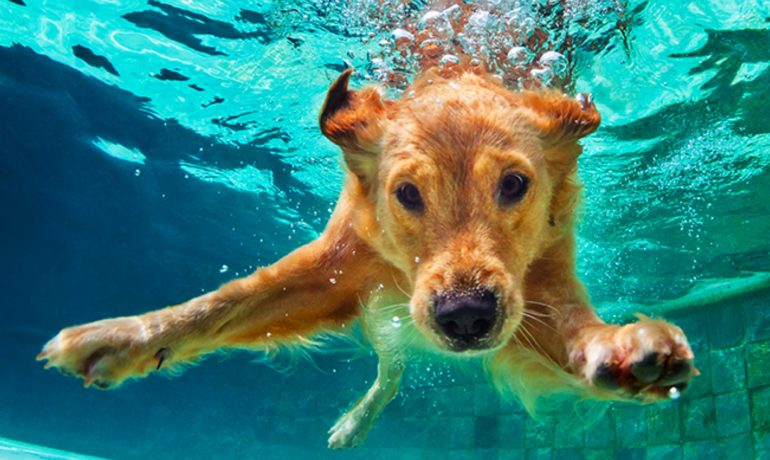 Weekly Expressions #54 – Até debaixo d'água