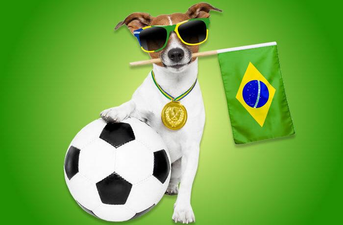 Real Brazilian Conversations #90: Animais de Estimação (Pets)